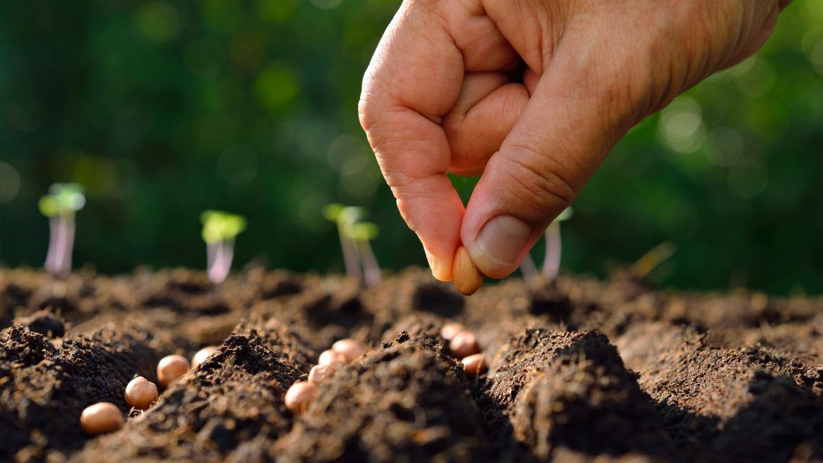 Коли сіяти насіння овочів у відкритий грунт