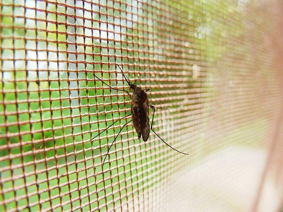 Как избавиться от комаров и москитов фумигаторы